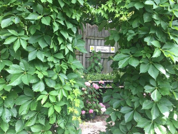 green leafy garden arbor