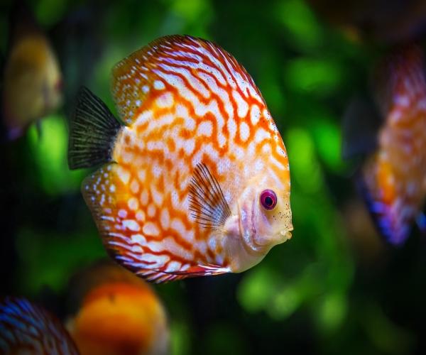 https://www.bioorbis.org/2018/08/orelha-peixe-vida-biologia.html