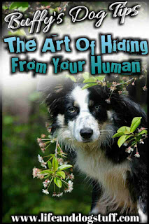 The Art of Hiding From Your Human - Buffy Dog Tips - dog hiding.
