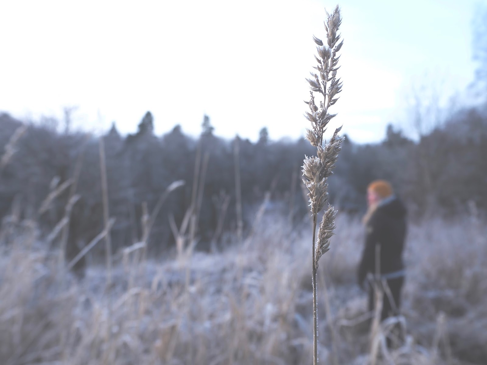 Mies seisoo pellolla, pohtii elämää.