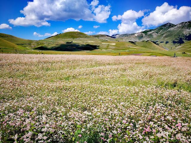 Particolare dei campi fioriti di Castelluccio di Norcia - Foto di Monica Gatti