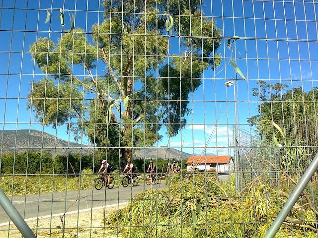 Κίνδυνος για τους διερχόμενους από μεγάλο δέντρο στην Άργους Τριπόλεως
