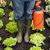 Saúde| Relatório denuncia contaminação de comunidades rurais por agrotóxicos