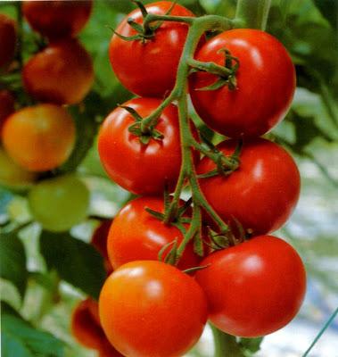 http://3.bp.blogspot.com/-rEVmNzE-RRU/Ud7-5NBwnjI/AAAAAAAAALM/8pWCWVoYqF4/s320/Tomat.jpg