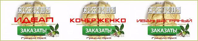 Как определить отличить саженцы Идеал и Кочерженко