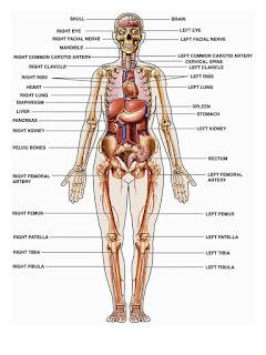 Sejarah Anatomi