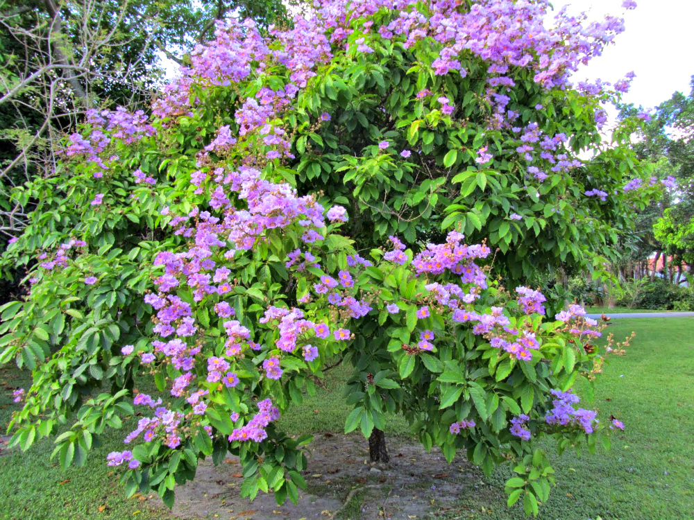 the Banaba Plant