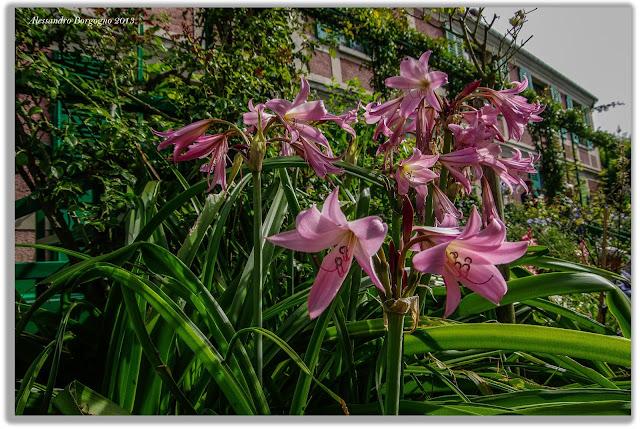 Monet, Giardini, Giverny