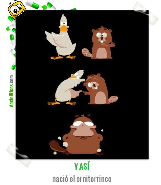 Chiste de Animales: Nacimiento del Ornitorrinco