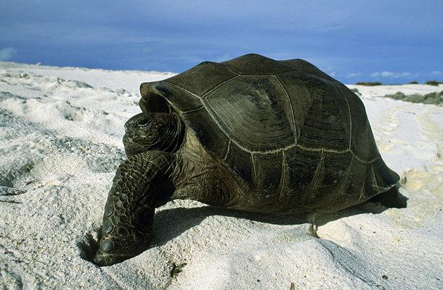 Aldabra Atoll