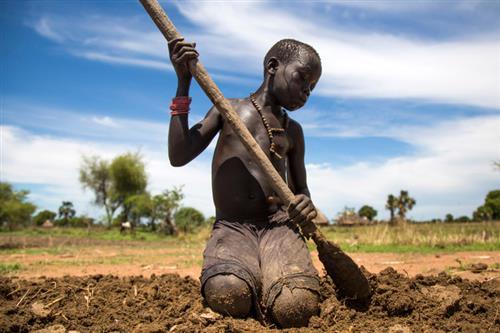 Nạn đói, Đức Phanxicô cung cấp hạt giống cho nông dân