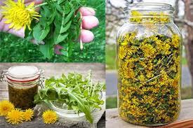 علاج السرطان بالأعشاب
