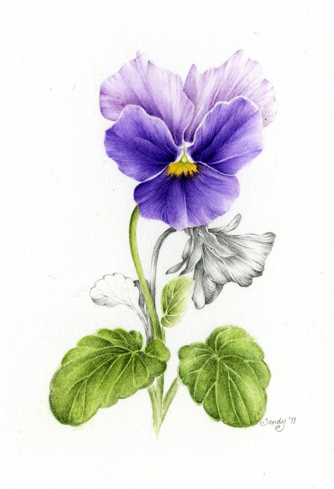 pansy flower drawing - photo #19