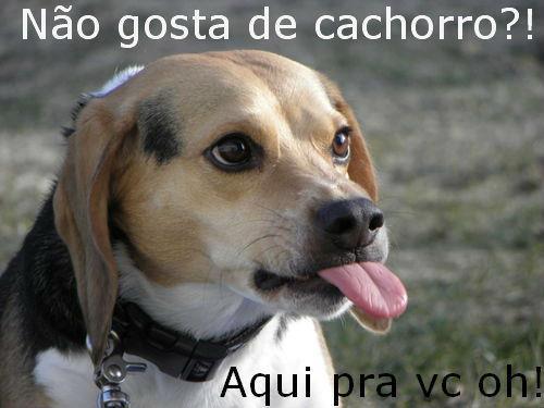 Frases Com Animais De Estimação Para Facebook: Pegadas Cães E Gatos: Mensagens Com Animais