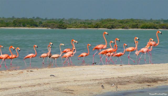 Réserve naturelle Rio Lagartos, flamants roses, Yucatan, Mexique