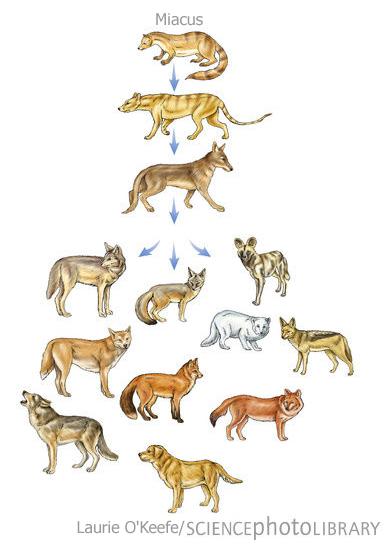Dog Blog: Feeding for health and longevity: Raw vs. kibble ...
