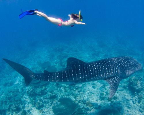Tinuku.com Travel Bunaken National Park in Manado, North Sulawesi, wonderful lined islands biota for diving and snorkeling