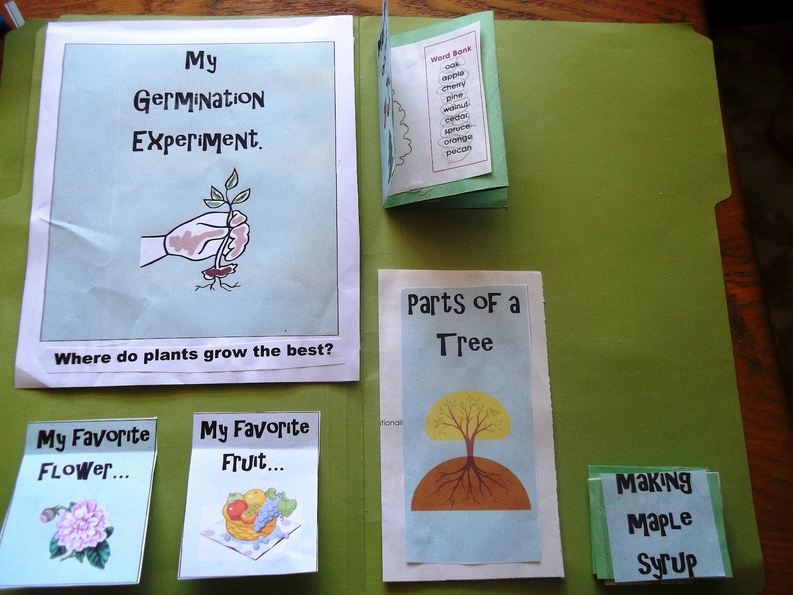 Plant Science Lapbook And Unit Study