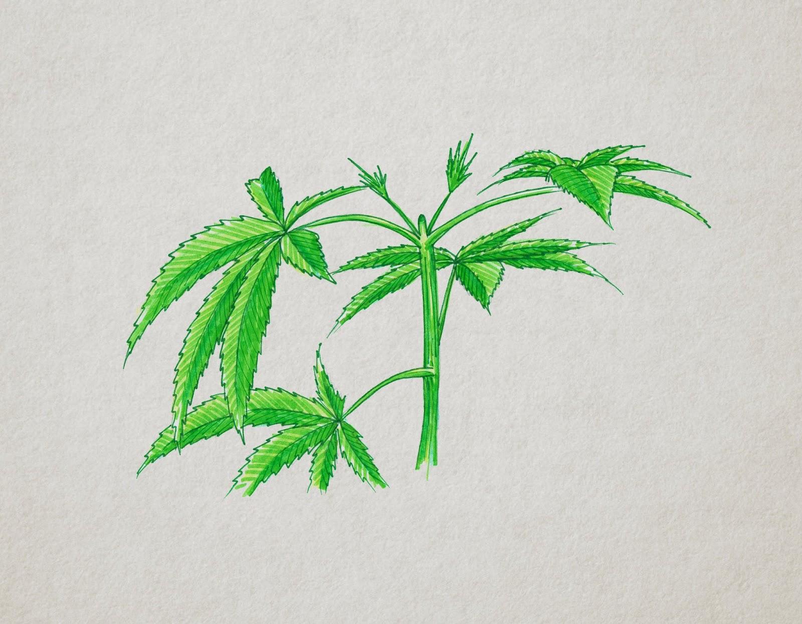 El Arte De Podar En Tu Cultivo De Marihuana