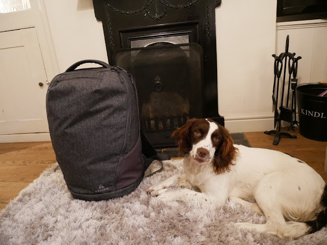 Pip the springer next to the Arcido Faroe backpack