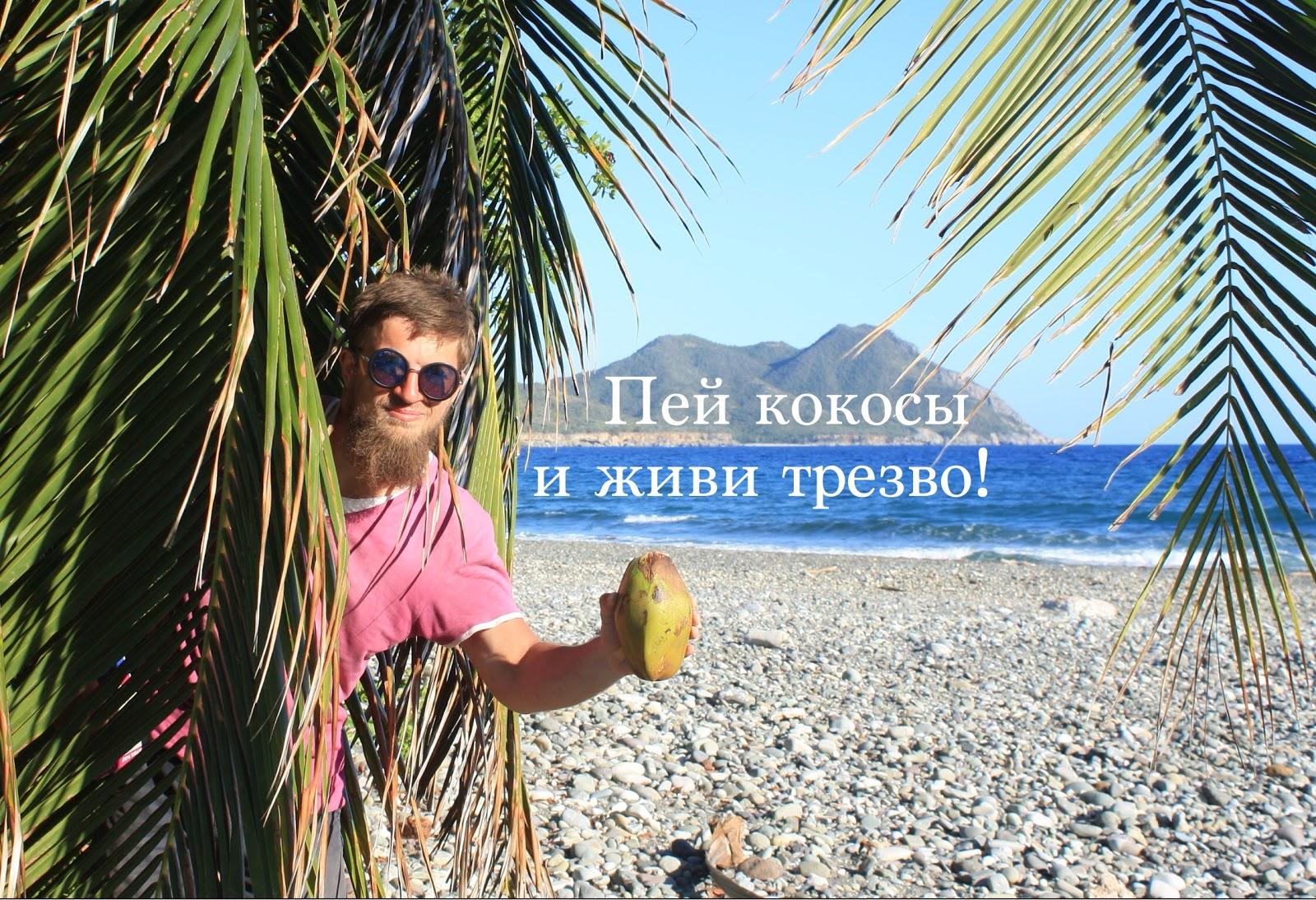 Путешественник и кокосовая пальма
