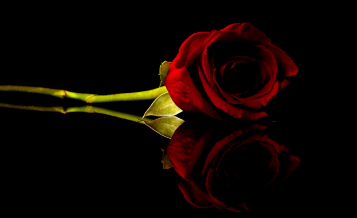 Red Rose Wallpaper Mac Wallpapers
