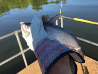 Catfishing, fishing, Fishing in Missouri