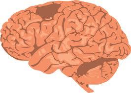 Penelitian dilakukan pada orang setengah baya dan kelebihan berat badan. Para ilmuwan menemukan bahwa otak manusia menurun lebih cepat daripada orang dengan berat badan normal dalam beberapa materi. Biasanya penurunan ini, tergantung pada usia, mulai menurun pada usia dini pada orang yang kelebihan berat badan dan dapat menyebabkan masalah kesehatan yang serius.  Beberapa Zat ini terdeteksi penurunan dalam tubuh, menyediakan komunikasi antara bagian otak dan jaringan yang terdiri dari serabut saraf. Tekan pengurangan ini dalam kegagalan komunikasi otak dan dapat menghapus banyak penyakit yang datang.