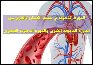 الدورة الدموية الكبرى, الدورة الدموية الصغرى, الدورة الدموية الطرفية, الدورة الدموية في جسم الانسان, الدورة الدموية في الانسان, الدورة الدموية الكبرى مكتشفها, الدورة الدموية الصغرى والكبرى pdf, الدورة الدموية عند الجنين