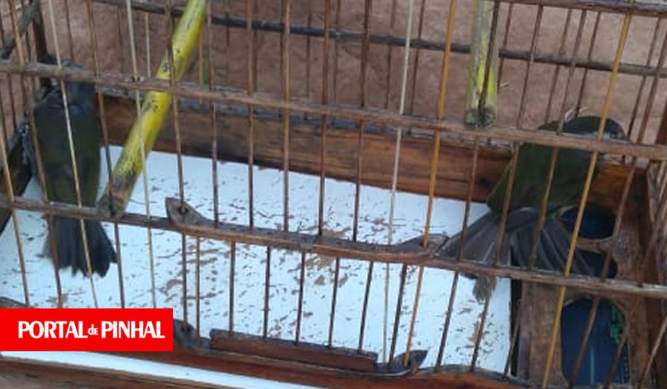 Homem de 62 anos é preso após matar cachorro a tiros na zona rural de Mogi Guaçu