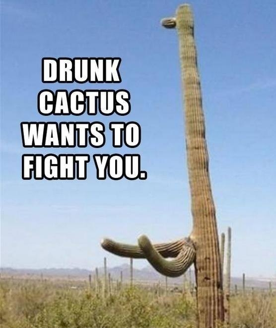 "funny nature picture shows a drunk cactus want to fight you from ""LOL me on"""