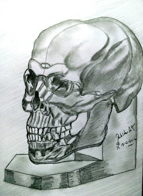 PENCIL DRAWING - HUMAN CRANIUM