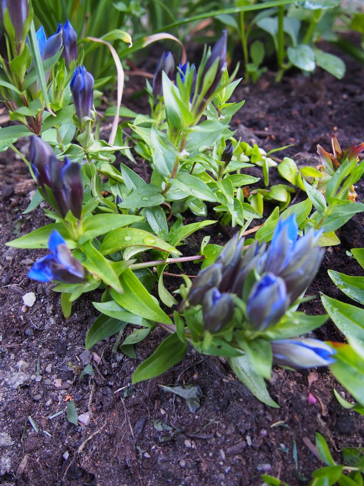 Kesän muistoja heinä- ja elokuulta