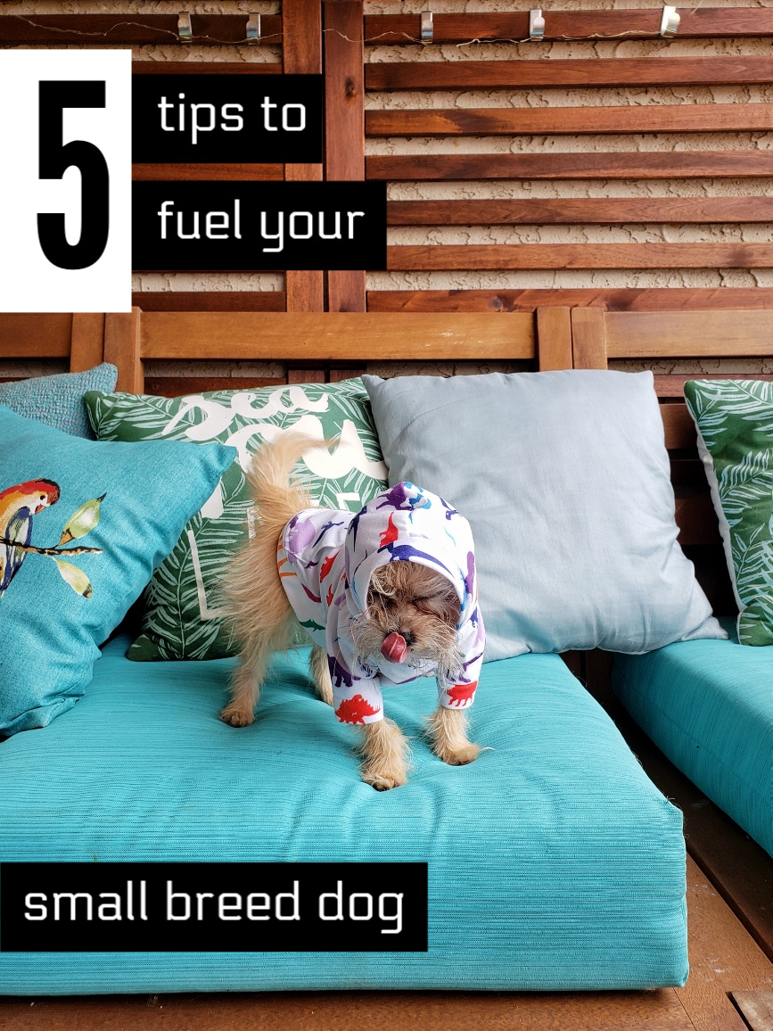 5 Simple Tips To Help Fuel Your Small Breed Dog #WellnessCORESmallBreed #AD