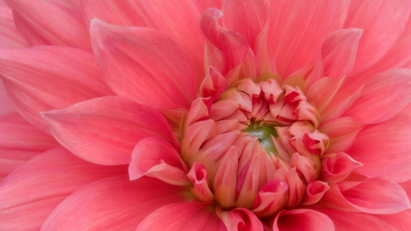 Desktop Widescreen Wallpapers: Blooming Flowers