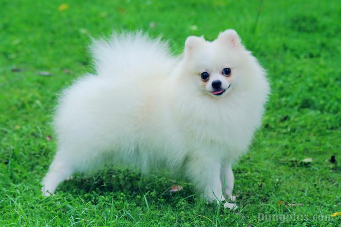 hình ảnh chó con dễ thương nhất 6