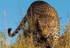 best african safari tour operators