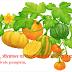 कद्दू, सीताफल या काशीफल की खेती कैसे करें-cultivate pumpkin,