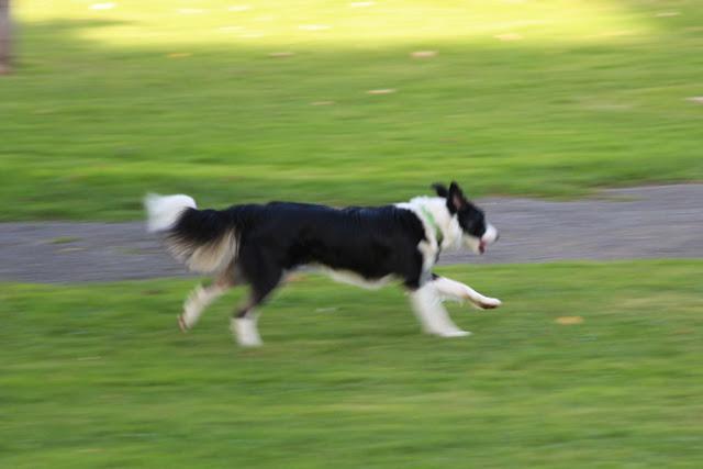 Un perro en el parque de La Orconera