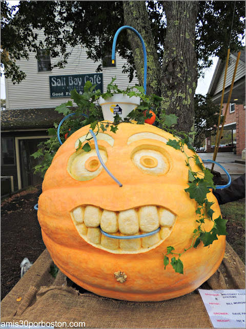 Calabazas Decoradas para Halloween: Calabaza con Planta
