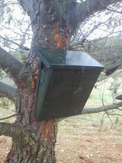 Caja nido agateador