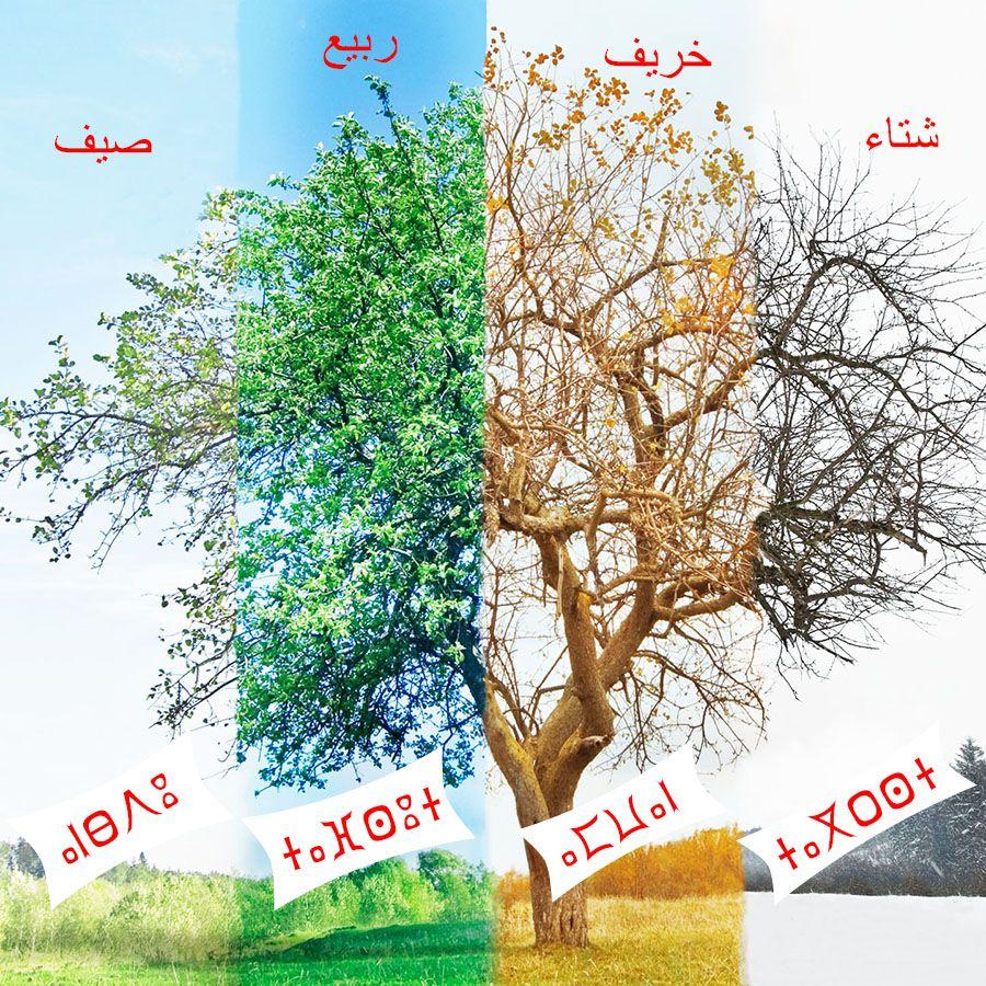 4 saisons en tamazight
