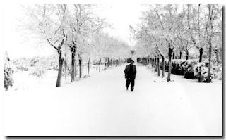 """Así amaneció el camino de entrada al colegio de San Hermenegildo (""""Los Frailes"""")."""