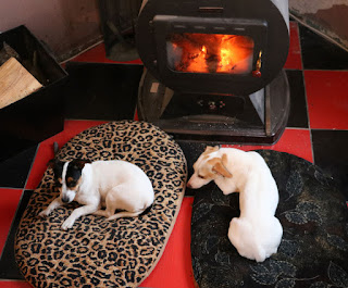 Puppies huddling in front of the fire first thing