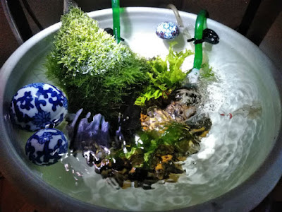 現在の睡蓮鉢。初夏にみるとその涼しげな感じがよくわかると思います。