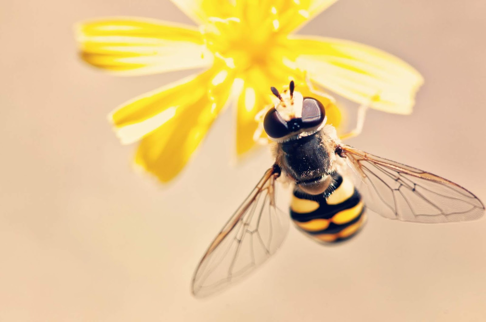 a wasp sitting on a yellow flower