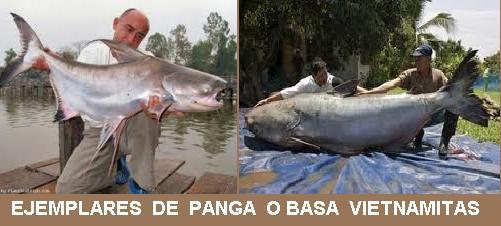 Resultado de imagen de panga pescado contaminado