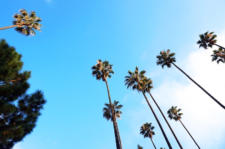 Euriental || fashion & luxury travel || palm trees, L.A