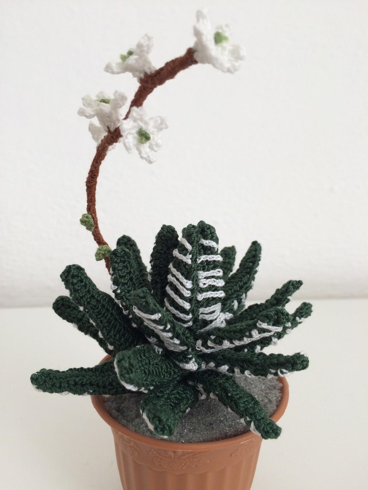 Il blog di sam how to corchet haworthia for Il blog di sam piante grasse