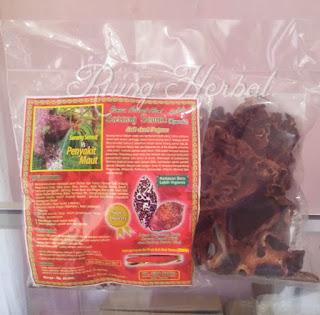 sarang semut papua bandung